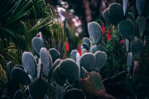Megan Aaseby: The Effects of Opuntia (Cactaceae) on Lowering Postprandial Blood Glucose